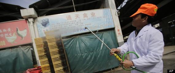 Trung Quốc báo động dịch cúm gia cầm H7N9 ảnh 1