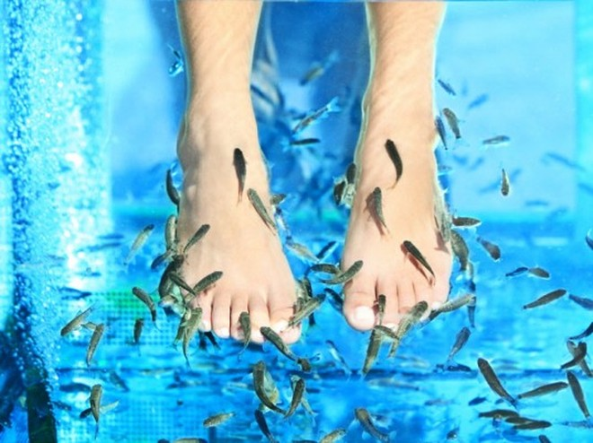 Hiểm hoạ khôn lường từ liệu pháp làm đẹp bằng cá, lươn ảnh 2