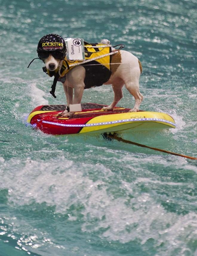 Con chó có khả năng lướt sóng, lái thuyền siêu đẳng ảnh 1
