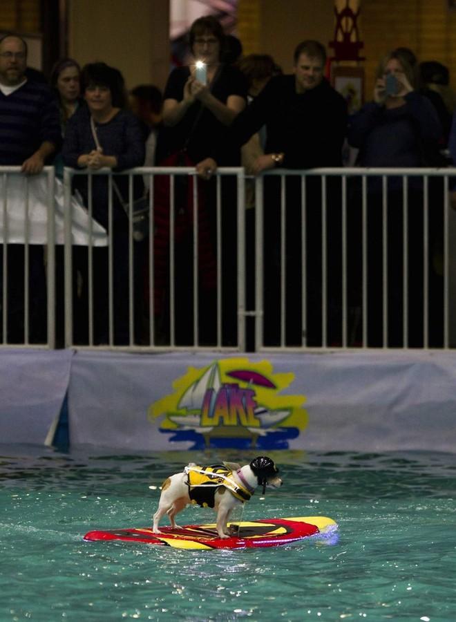 Con chó có khả năng lướt sóng, lái thuyền siêu đẳng ảnh 2