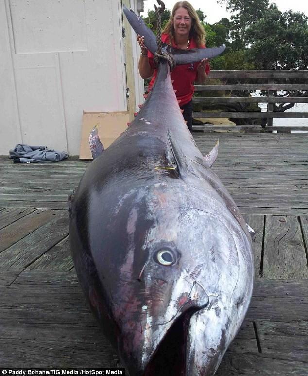 Bắt được cá ngừ khổng lồ trị giá 2 triệu USD ảnh 2