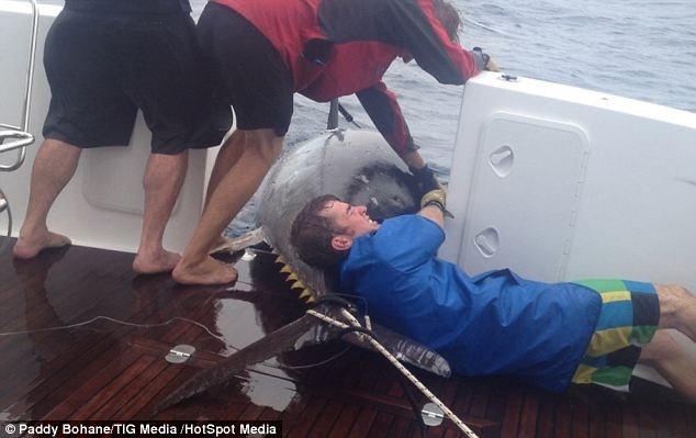 Bắt được cá ngừ khổng lồ trị giá 2 triệu USD ảnh 1