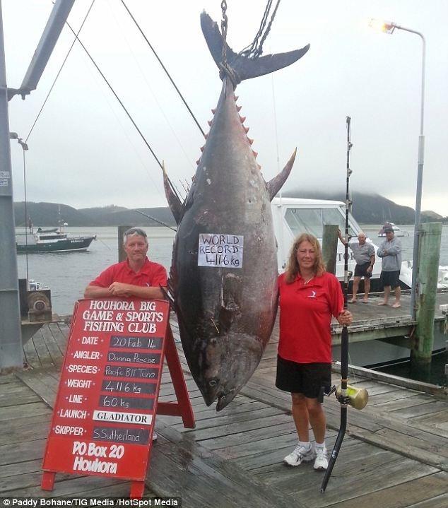 Bắt được cá ngừ khổng lồ trị giá 2 triệu USD ảnh 3