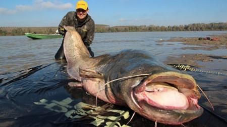 Bắt được cá trê khổng lồ bị nghi ngờ đột biến từ phóng xạ Chernobyl ảnh 1