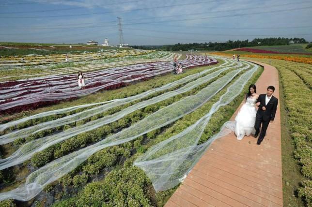 Cô dâu mặc bộ váy cưới dài kỉ lục 4,8 km ảnh 1