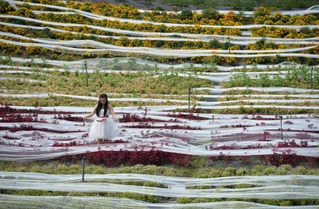 Cô dâu mặc bộ váy cưới dài kỉ lục 4,8 km ảnh 2