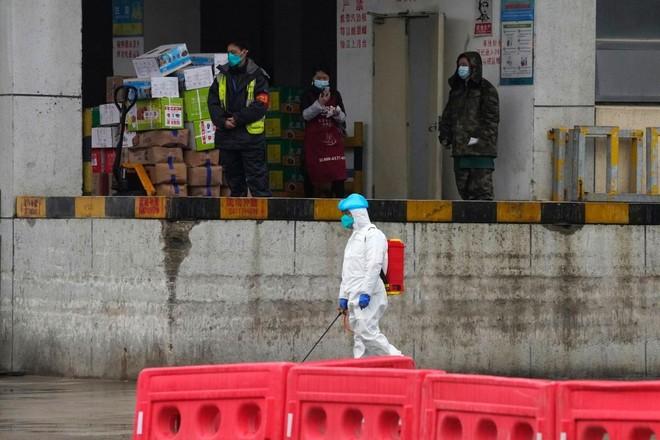 Nhóm chuyên gia WHO đến thăm chợ hải sản ở Vũ Hán ảnh 1