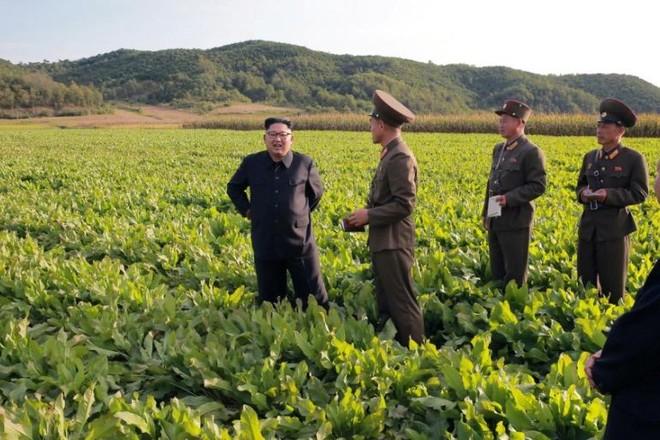 Nhập khẩu hàng hóa từ Trung Quốc vào Triều Tiên tăng mạnh ảnh 1