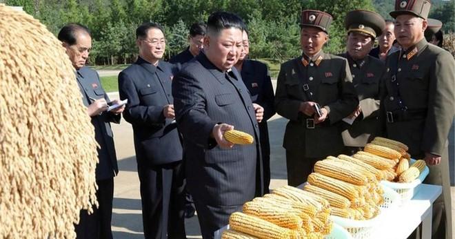 Triều Tiên thừa nhận đang trải qua tình trạng thiếu lương thực trầm trọng ảnh 1