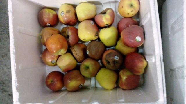 Phát hiện gần 1 tấn táo Envy nhập khẩu thối hỏng