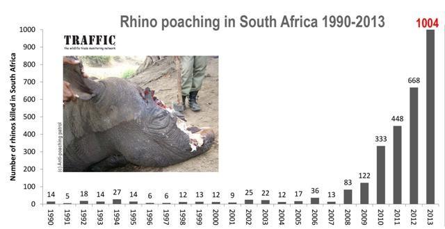 Mỗi ngày có tới 3 con tê giác bị giết hại lấy sừng ảnh 1