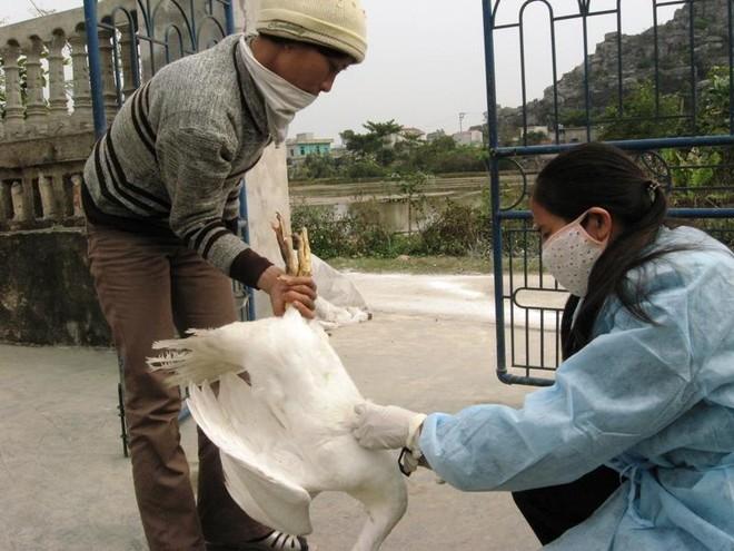 Vì sao 154 nhân viên thú y Hà Nội bị chấm dứt hợp đồng lao động? ảnh 1