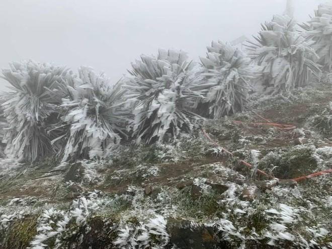 Không khí lạnh tăng cường, nhiều nơi ở Bắc bộ ghi nhận nhiệt độ âm ảnh 1