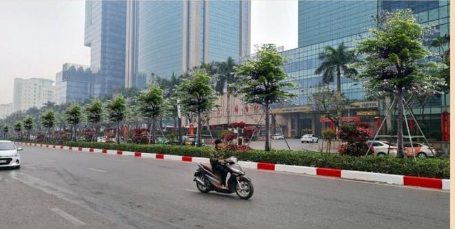 Hà Nội thay thế hàng cây Phong ở Nguyễn Chí Thanh bằng cây bàng lá nhỏ ảnh 1