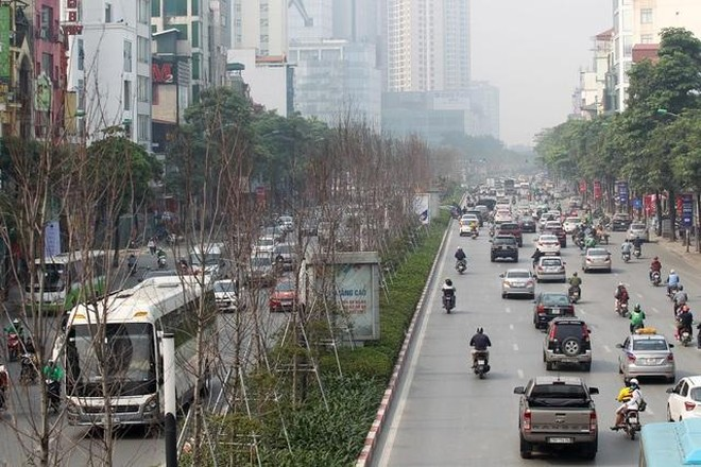Vì sao phải thay thế cây phong trên trục đường Nguyễn Chí Thanh - Trần Duy Hưng? ảnh 1