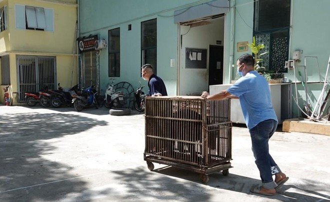 Bốn cá thể gấu cuối cùng ở Rạp xiếc Trung ương đã chuyển giao về Trung tâm cứu hộ ảnh 2