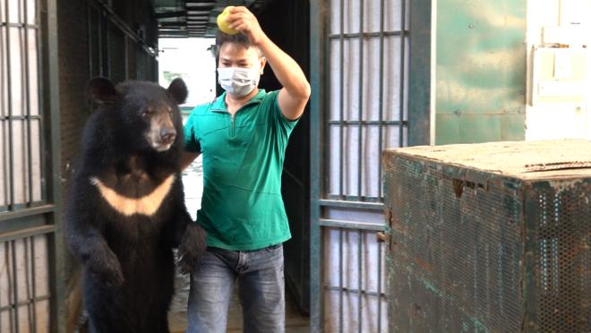 Bốn cá thể gấu cuối cùng ở Rạp xiếc Trung ương đã chuyển giao về Trung tâm cứu hộ ảnh 1