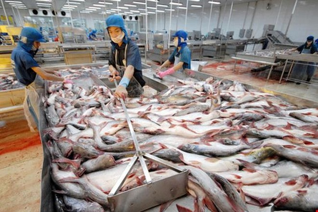 Hơn 100 nhà máy chế biến thủy sản phải đóng cửa vì Covid-19 ảnh 1
