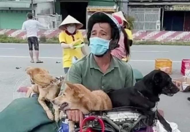 Vụ tiêu hủy 15 con chó ở Cà Mau: Cục Thú y nói gì? ảnh 1