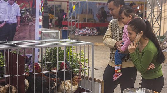Nhiều nét độc đáo tại hội chợ Xuân đón Tết cổ truyền Giáp Ngọ ảnh 3