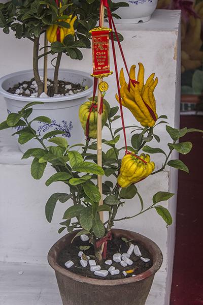 Nhiều nét độc đáo tại hội chợ Xuân đón Tết cổ truyền Giáp Ngọ ảnh 6
