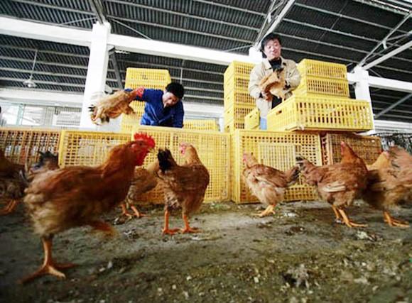 Nguy cơ lây lan và biện pháp phòng tránh H7N9 ảnh 1