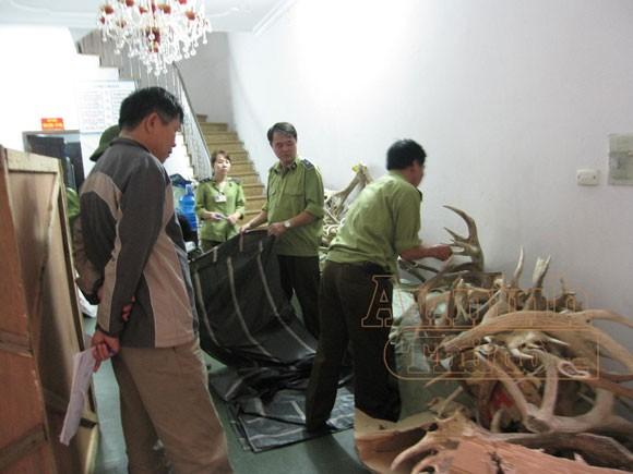Phát hiện sừng hươu giấu trong thùng đựng hoa quả ảnh 1