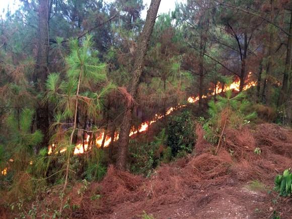 70 ha rừng thông bị thiêu rụi, 2 đồng chí bộ đội bị thương ảnh 1