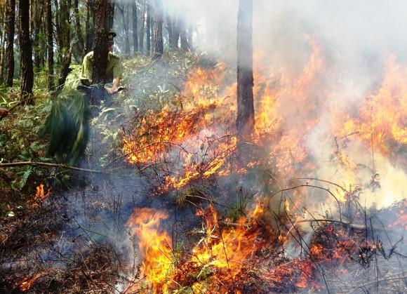 Nắng nóng gay gắt, liên tục xảy ra cháy rừng ảnh 1