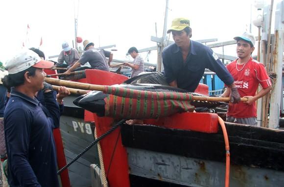 Liên kết từ 20-30 chủ tàu khai thác cá ngừ theo chuỗi giá trị ảnh 2