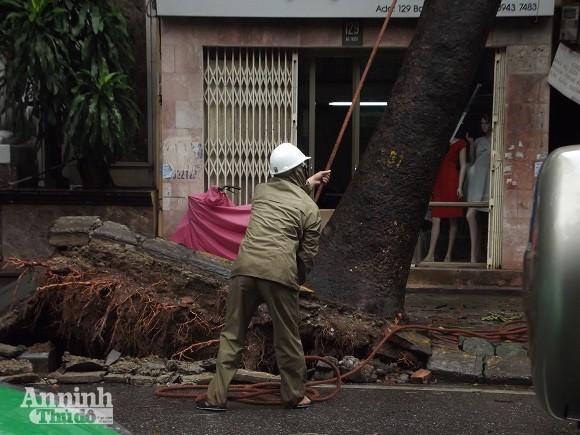 Hà Nội: Cây lớn bật gốc đổ vào nhà dân ảnh 3