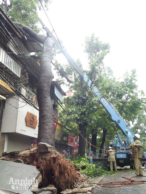 Hà Nội: Cây lớn bật gốc đổ vào nhà dân ảnh 4