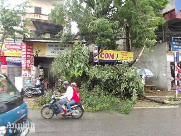 Hà Nội: Cây lớn bật gốc đổ vào nhà dân ảnh 5