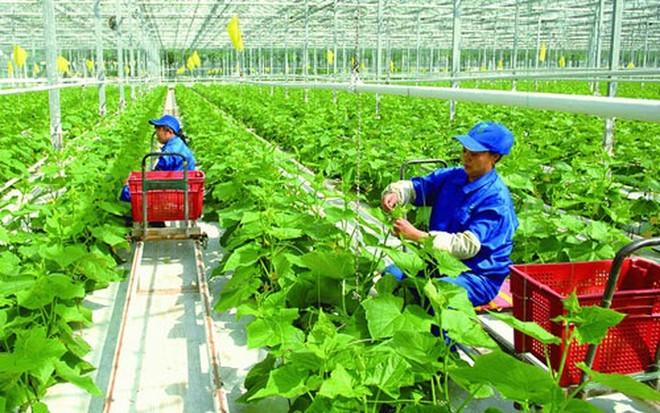 Đài Loan tiếp nhận thêm lao động Việt Nam làm việc trong 7 ngành nghề mới ảnh 1