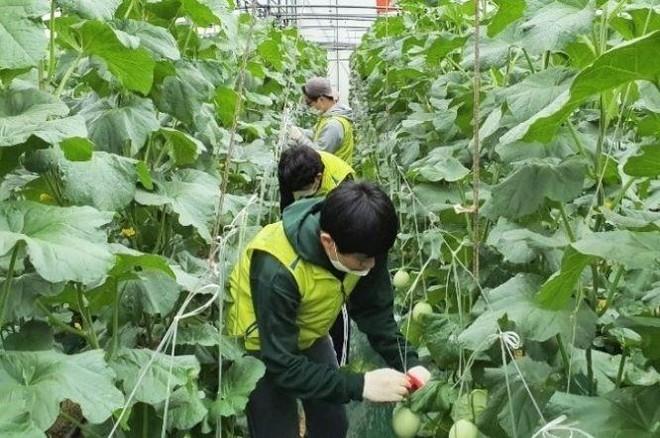 Hàn Quốc cho phép lao động Việt Nam hết hạn hợp đồng ở lại đến năm 2022 ảnh 1