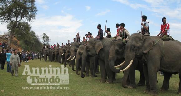 Bảo tồn voi Tây Nguyên: Vẫn nói nhiều và làm trên... giấy ảnh 1