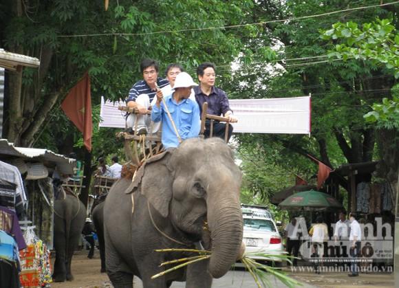 Bảo tồn voi Tây Nguyên: Vẫn nói nhiều và làm trên... giấy ảnh 4