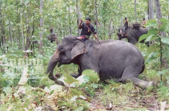 Bảo tồn voi Tây Nguyên: Vẫn nói nhiều và làm trên... giấy ảnh 5