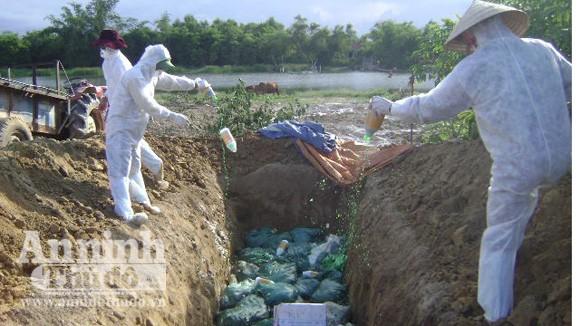 Tiêu huỷ hơn 1.100 con vịt nhiễm H5N1 ảnh 1