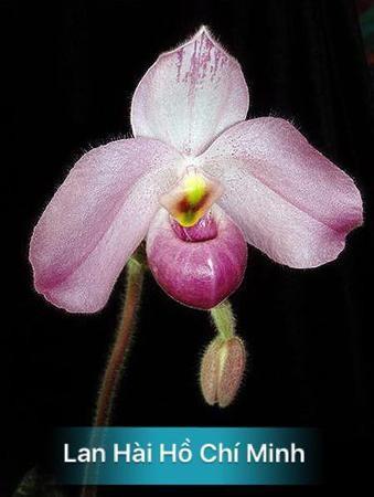 Các nhà thực vật học quốc tế với thế giới hoa lan Việt Nam ảnh 15