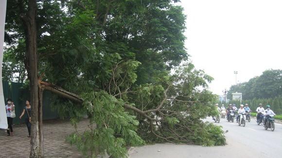 Cành cây gãy - tiềm ẩn nguy hiểm!
