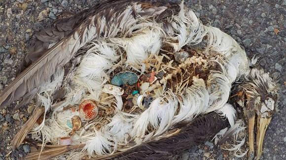 Hiểm họa từ rác thải nhựa ảnh 1