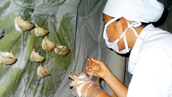 """Cúm A/H5N1: 100% tổ yến vẫn """"bình yên"""" ảnh 1"""
