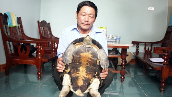 Nghệ An: Rùa nặng 12kg bò vào nhà dân ảnh 1