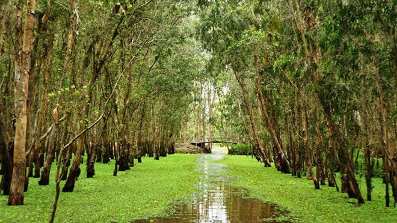 Rừng tràm Trà Sư mùa nước nổi ảnh 1