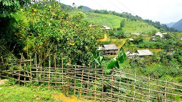 Vườn địa đàng lưng núi Pù Bin ảnh 1