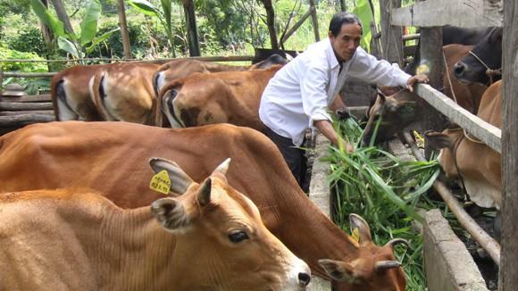 4.000 con bò qua biên giới mỗi ngày ảnh 1
