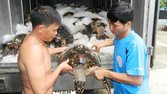Hiểm họa từ những chuyến săn rùa biển ảnh 1