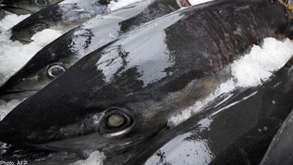 Ăn nhiều cá biển nước sâu dễ ngộ độc thủy ngân ảnh 1