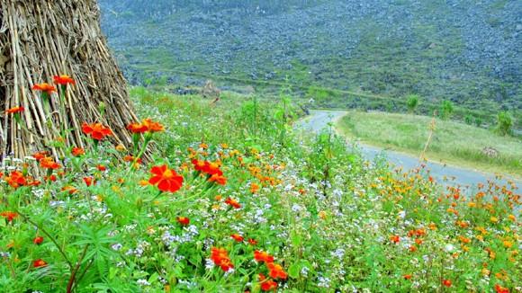 Đi qua những mùa hoa ảnh 1